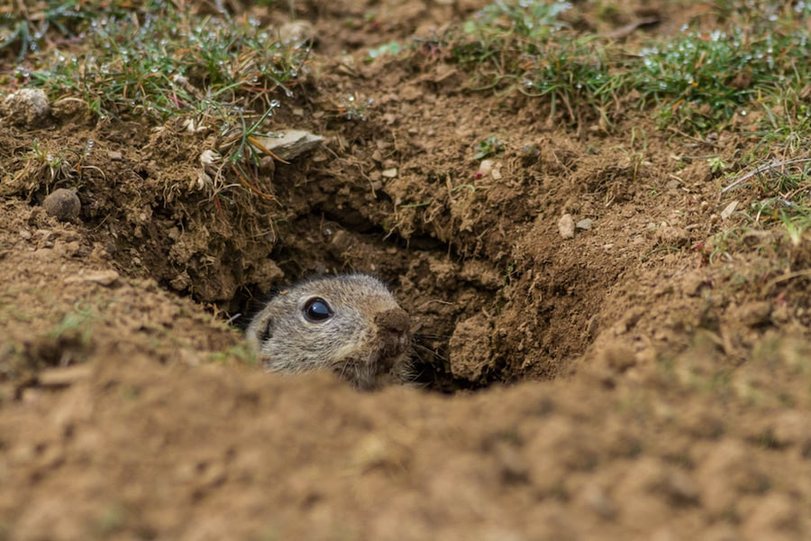 Animal burrow