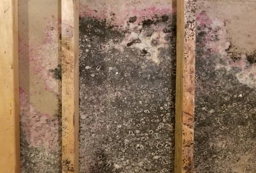 Moldy basement walls